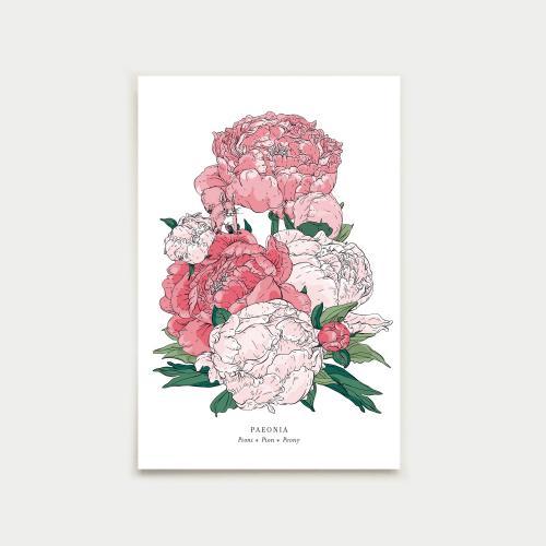 Paeonia postikortti, botanical