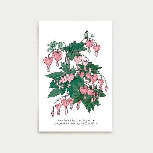 Lamprocapnos vykort, botanical