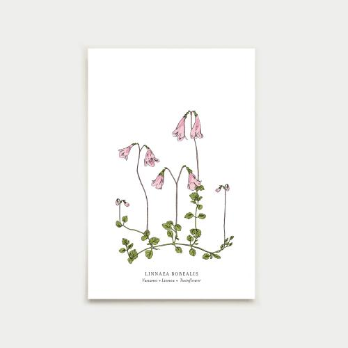Linnaea postikortti, botanical