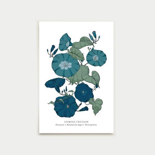 Ipomoea postikortti, botanical