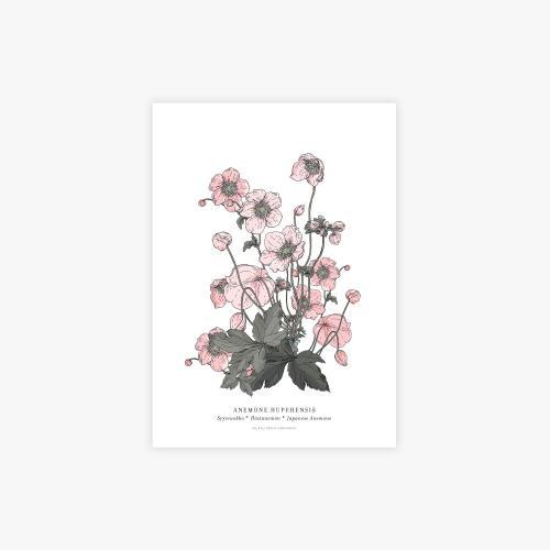 Anemone botanical printti, A4