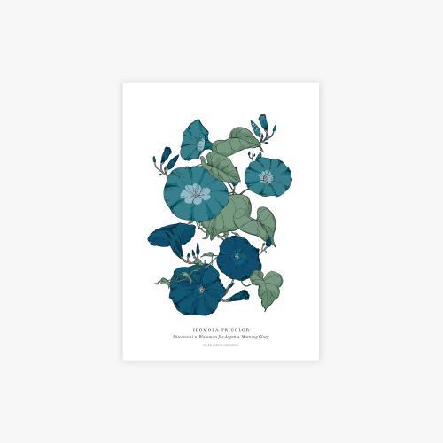Ipomoea botanical printti, A4