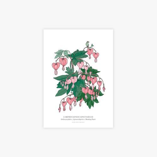 Lamprocapnos botanical printti, A4