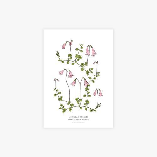 Linnaea botanical printti, A4