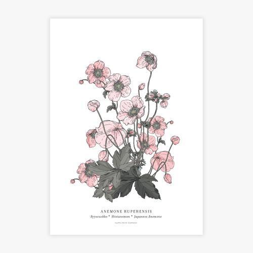 Anemone botanical printti, A3