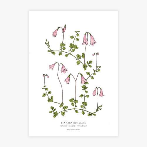 Linnaea botanical printti, A3