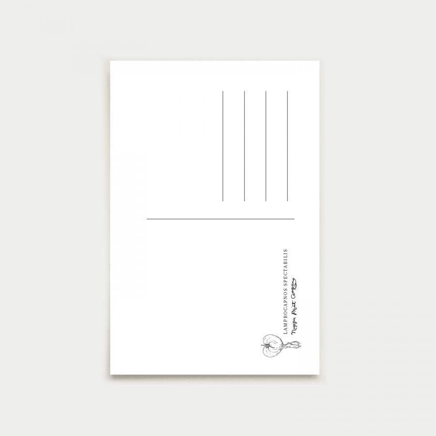 Lamprocapnos postikortti, botanical