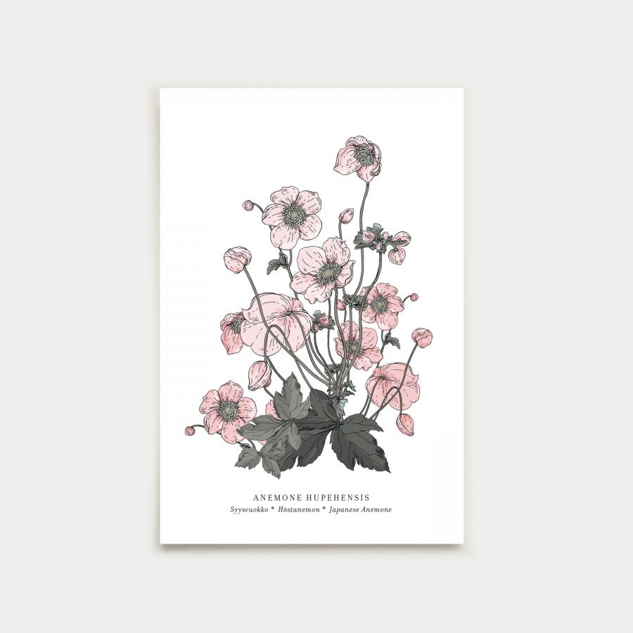 Anemone postikortti, botanical